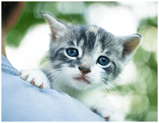 Your Animal Hospital in La Crosse: Timid Kitten